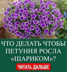Садовые Дорожки, Цветы, Растения, На Открытом Воздухе, Садоводство