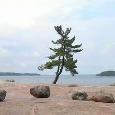 Killbear Provincial Park Ontario, Canada Lake Camping, Camping Spots, Outdoor Camping, Ontario Provincial Parks, Ontario Parks, Beautiful Places, Beautiful Pictures, Family Trips, Tree Silhouette