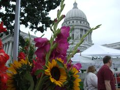 Madison, WI Farmer's Market around the Capitol! I actually feel the weight of the world leave my shoulders once I step out of the car at the Mad City Farmer's Market