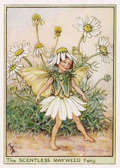 This beautifull Scentless Mayweed Flower Fairy Vintage Print by Cicely Mary Barker