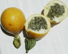La granadilla, similar a la maracuyá. / The granadilla, similar to passionfruit. #fruit #granadilla