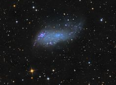 IC 2574: Coddington's Nebula - The  dwarf galaxy , IC 2574 is part of the M81 group of galaxies, seen toward the northern constellation Ursa Major and is about 50,000 light-years across.  (credit & copyright: Stephen Leshin)