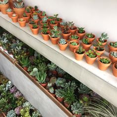 Mini & Midi plastic cups with our various succulents that are not only presentable two have around the house, office or garden but easy to transfer to other pots around the house. Cacti And Succulents, Planting Succulents, Cactus Plants, Garden Plants, Planting Flowers, Indoor Garden, Indoor Plants, Deco Cactus, Plantas Indoor
