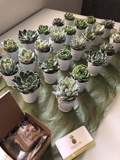 25 Succulent Favors in White Pails-Garden Party Favors-Succulent Wedding Plant Favors-Bridal Shower Favors-Wedding Succulents Bouquet Succulent, Succulent Party Favors, Garden Party Favors, Succulent Gifts, Succulent Centerpieces, Wedding Centerpieces, Succulent Names, Wedding Shower Favors, Unique Wedding Favors