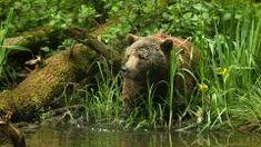 Braunbär Balou - BÄRENWALD Müritz Brown Bear, Animals, Into The Wild, Holiday Travel, One Day Trip, Wild Animals, Tourism, Travel Destinations, Animales