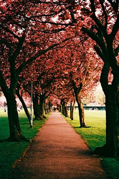 Spring - Scotland