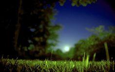 Lua, Nascer, Verão!