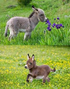 Mom and baby enjoying some treats Baby Donkey, Cute Donkey, Mini Donkey, Baby Cows, Baby Elephants, Cute Funny Animals, Cute Baby Animals, Nature Animals, Animals And Pets