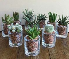 succulents mason jar succulents centerpiece succulents indoor succulents in c Pflanzideen Mason Jar Succulents, Succulent Centerpieces, Succulents In Containers, Cacti And Succulents, Planting Succulents, Cactus Plants, Garden Plants, Indoor Plants, Planting Flowers