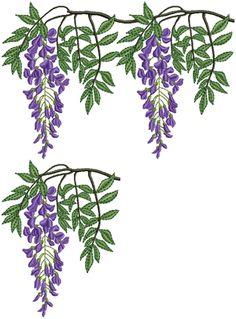 Wisteria - Purple Vine