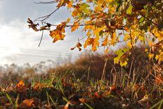 Autumn 2013 by Tomáš Zúbrik on 500px