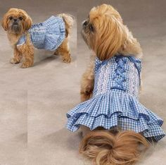 Zack & Zoey XS Blue Gingham Southern Belle Dog Dress $39.99