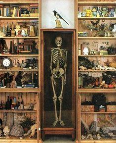 Resultado de imagen de Cabinet of Curiosities By Jean-Jacques Gaudel