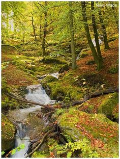 Woodland stream in the Welsh mountains, UK