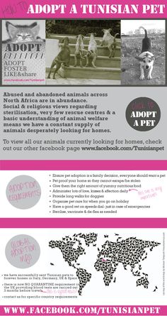 """""""Adopt a Tunisian Pet"""" is a private initiative dedicated to helping stray animals in North Africa. In these countries there are barely any animal shelters and there are very limited possibilities to cure sick animals. Lots of them are living and dying in misery in the streets. If you can help contact: adoptatunisianpet@gmail.com Please Like our Facebook page, Foster, Adopt, Share, Donate ... to make a difference."""
