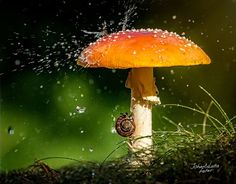 Mushroom Umbrella-Wild animals have their own ways of coping with rainwater, but sometimes, when they find themselves under an opportune leaf, flower or mushroom, they look just like people hiding from the rain under umbrellas! Wild Mushrooms, Stuffed Mushrooms, Mushroom Fungi, Cute Baby Animals, Wild Animals, Small Animals, Natural World, Amazing Nature, Mother Nature