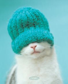 Thank you for knitting me a new hat, Grandma.  I love it.  Really.