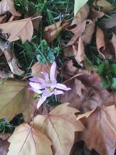 Unha flor moi fermosa.  Paseo do Río Arnoia en Allariz