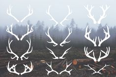 Deer Antlers - 12 Hand Drawn Vectors - Illustrations - 1