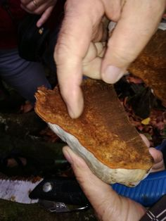 Troudnatec kopytovitý, jedna z našich nejhojnějších dřevokazných hub - Čarovná lékárna kolem nás Meat, Food, Essen, Meals, Yemek, Eten