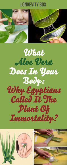 What Aloe Vera Does In Your Body Why Egyptians Called It The Plant Of Immortality