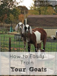 train your goat