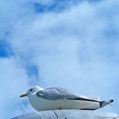 Seagull / Blue aesthetic / Ocean vibes