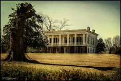 """Glen Mary, located in Sparta, Georgia, home of Major General Ethan Allen Hitchcock (May 18, 1798-August 5, 1870), advisor to Lincoln and """"Pen of the Army,"""" is the only surviving rural High Greek Revival """"raised cottage"""" plantation house remaining in the United States which is situated on a portion of original cotton plantation lands."""