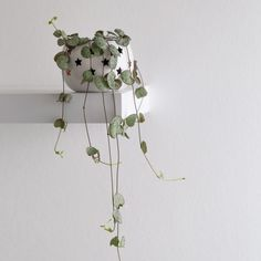When one heart isn't quite enough, it's time to bring on an entire plant! A string of hearts (Ceropegia woodii) has trailing stems dotted with small, heart-shaped leaves that are usually green and silver but can sometimes have a touch of pink. This vine loves plenty of sunlight, so place your plant in a south-facing window. Bright Flowers, Pink Flowers, Hanging Plants, Indoor Plants, Organic Gardening Tips, Indoor Gardening, Arrowhead Plant, Low Maintenance Plants, String Of Pearls