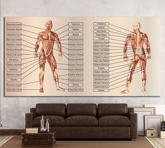 Unique Wall Art, Modern Wall Art, Canvas Frame, Canvas Art, Canvas Prints, Chiropractic Office Design, Man Anatomy, Anatomy Drawing, Medical Office Design