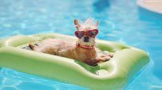 Dog Pool Floats, Online Vet, Pergola, Cute Piggies, Dog Boutique, Dog Crate, Pets, Pet Care, Best Dogs