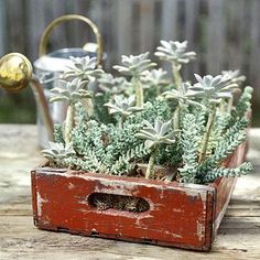 An old beverage bottle case gets new life as home for a so-easy succulent container garden: http://www.midwestliving.com/garden/container/easy-succulent-container-gardens/?page=7
