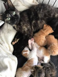 A litter of tiny kittens were saved and reunited with their mama thanks to a kind man who spent hours rescuing the feline family and making sure no one was left behind.The Kitten CottageThe Kitten Cottage, a rescue group in Malmesbury, Western Cape, received a phone call from a travel company last m...