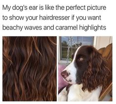 Dog Memes That Will Keep You Laughing For Hours - 39