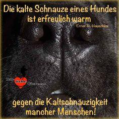 Die kalte Schnauze eines Hundes ist erfreulich warm gegen die Kaltschnäuzigkeit mancher Menschen!