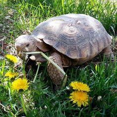 3887 Best Tatinhas Images On Pinterest Turtles