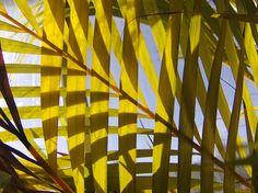 Palm Silhouette by Julie Shackson, via Flickr