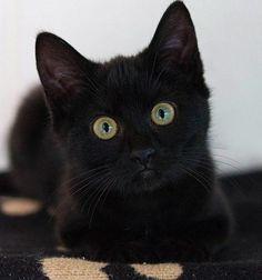 Black kitty courtesy of Zen