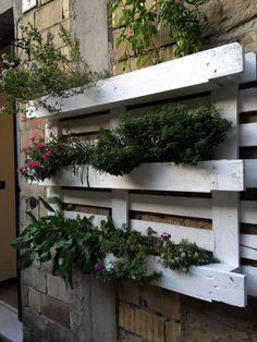 Herb garden in a wooden pallet, as seen in Italy!