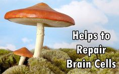 Research has found that psilocybin, a compound in psychedelic mushrooms, can help grow and repair new brain cells, helping to eradicate mental illness.