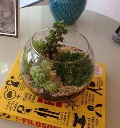 suculentas em terrario de vidro