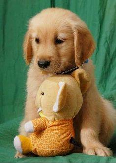 Cuddly...wuddly....fluffy...puppy! Darling