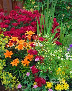 8 Flower Landscape Ideas For Your Garden – Garden Ideas 101 Beautiful Flowers Garden, Flowers Nature, Pretty Flowers, Beautiful Gardens, Flowers Perennials, Planting Flowers, Cottage Garden Design, Colorful Garden, Flower Beds