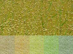 van Besouw - 3802 tapijt katoen, uiteraard te koop bij Eurlings Interieurs https://www.facebook.com/eurlingsinterieurs http://www.eurlingsinterieurs.nl/