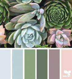 Succulent Hues | Design Seeds