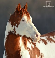 While Equine Photography is my specialty, my other areas of interest are Pet Portrait, Wildlife Photography and Concert photography. Below you may browse through a few of my images.