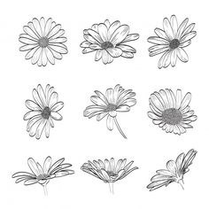 Daisy hand drawn collection   Premium Vector #Freepik #vector #background #flower #wedding #vintage Daisy Flower Drawing, Daisy Flower Tattoos, Flower Drawing Tutorials, Flower Sketches, Floral Drawing, Gerbera Daisy Tattoo, White Daisy Tattoo, Tattoos Of Flowers, Flower Sketch Images