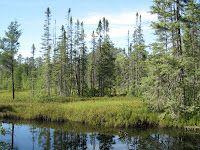 "Seney National Wildlife Refuge, Upper Peninsula, Michigan. Ernest Hemingway's ""Big Two-Hearted River"" was set here."