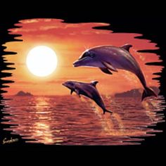 Dolphin Sunset T-Shirt 2