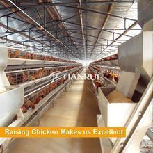 Tianrui Factory Direct Supply A Type Full Automatic Chicken Layer Cage Chicken Cages, Hen Chicken, Diy Chicken Coop, Used Farm Equipment, Poultry Equipment, Types Of Poultry, Cages For Sale, Hen Farm, Hatching Chickens